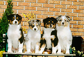 PUP 15 CE0017 01