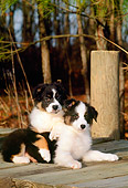 PUP 15 CE0019 01