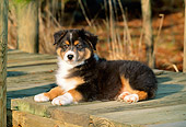 PUP 15 CE0020 01