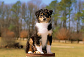 PUP 15 CE0021 01