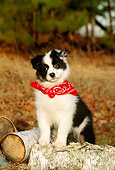 PUP 15 CE0022 01