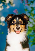 PUP 15 CE0026 01
