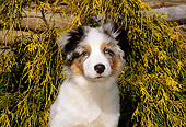 PUP 15 CE0027 01