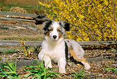 PUP 15 CE0028 01