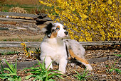 PUP 15 CE0028 02