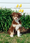 PUP 15 CE0029 01