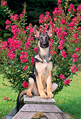 PUP 15 CE0032 01