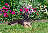 PUP 15 CE0033 01