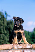 PUP 15 CE0036 01