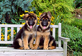 PUP 15 CE0040 01