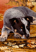 PUP 15 DC0026 01