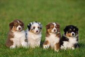 PUP 15 KH0001 01