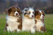 PUP 15 KH0002 01