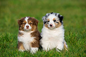 PUP 15 KH0003 01