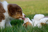 PUP 15 KH0004 01