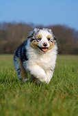PUP 15 KH0008 01