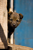 PUP 15 KH0009 01