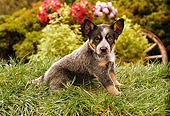PUP 15 RC0001 01