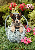 PUP 15 RC0002 01