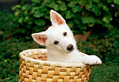 PUP 15 RC0003 01