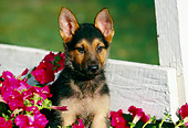 PUP 15 RK0030 06