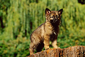 PUP 15 RK0045 07