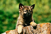 PUP 15 RK0046 04