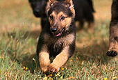 PUP 15 RK0057 07