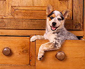 PUP 15 RK0076 05