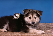 PUP 15 RK0086 03