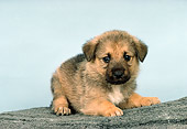 PUP 15 RK0089 03