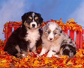 PUP 15 RK0091 02