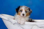 PUP 15 RK0092 01