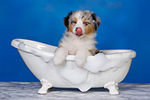 PUP 15 RK0093 01