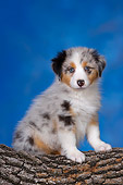 PUP 15 RK0095 01