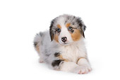 PUP 15 RK0096 01