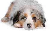 PUP 15 RK0098 01