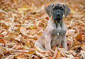 PUP 16 AB0001 01