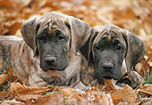 PUP 16 AB0003 01