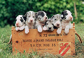 PUP 16 AB0004 01