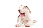 PUP 16 JE0002 01