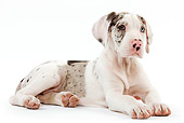 PUP 16 JE0003 01