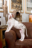 PUP 16 JE0004 01
