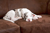 PUP 16 JE0005 01