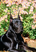 PUP 16 CE0001 01