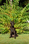 PUP 16 CE0003 01