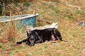 PUP 16 CE0004 01