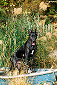PUP 16 CE0005 01