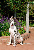 PUP 16 CE0010 01