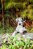 PUP 16 CE0011 01